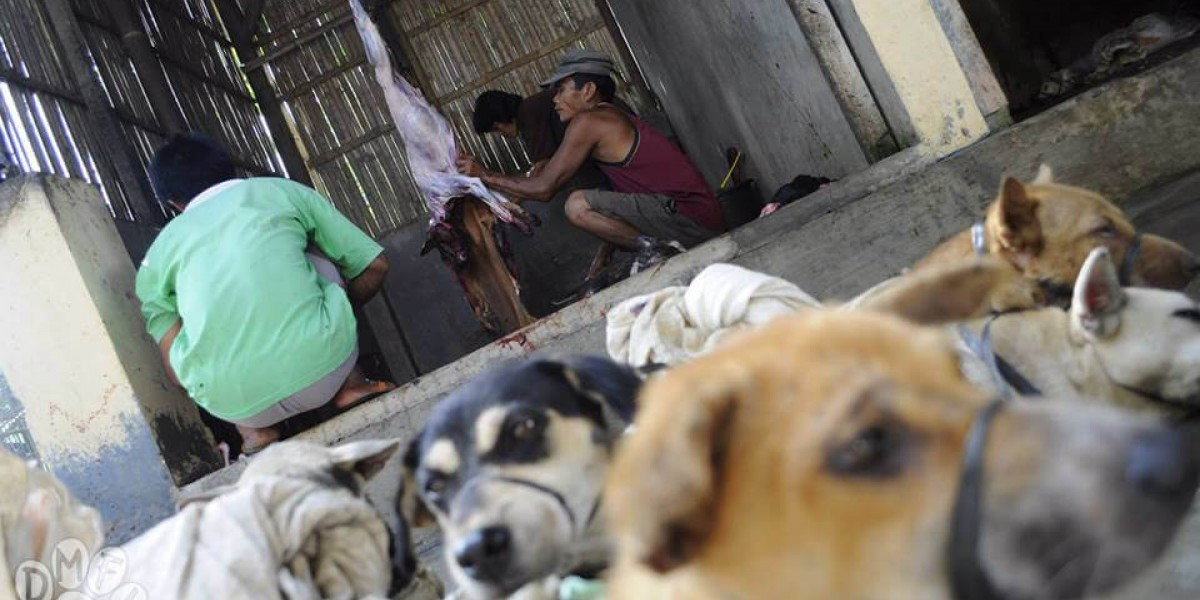 Armed thieves, rabies-infected dog meat highlight dangers of Indonesia's dog and cat meat trade as campaigners fear tourists could be at risk