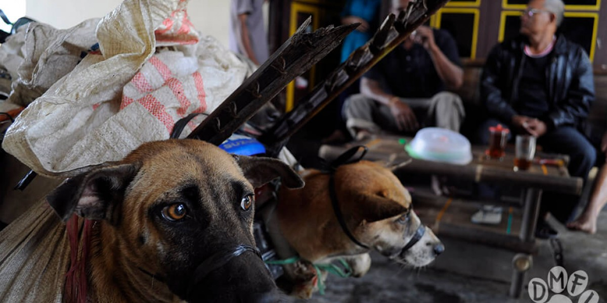 North Sulawesi Governor accused of hypocrisy as Manado set to host World Rabies Day events whilst brutal dog meat trade allowed to thrive.
