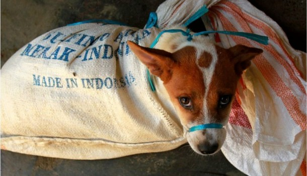Indonesia's dangerous & illegal dog meat trade continues unchallenged amidst Covid-19 pandemic, despite warnings from health experts and campaigners