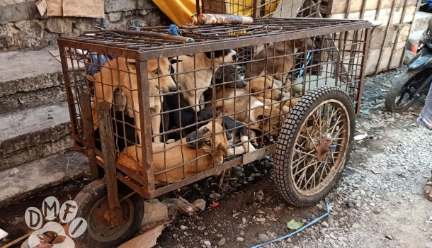 250,000 petition signatures are presented to Indonesia's North Sulawesi Governor defying Government's call to end the dog and cat meat trade