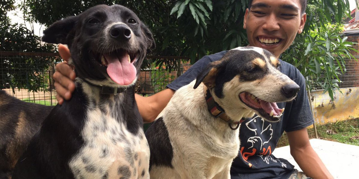 Ending Indonesia's Dog and Cat Meat Trades: The Journey So Far